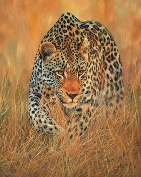 Wildlife Artist Wall Art - Painting - Stalking Leopard by David Stribbling