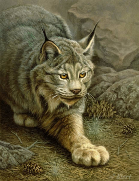 Wall Art - Painting - Stalking Lynx by Paul Krapf