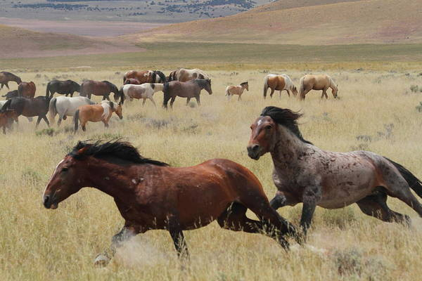 Stallion Chase Art Print by Gene Praag