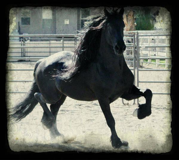 Stallion In Motion Art Print