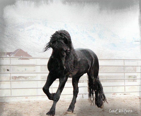 Stallion Magic Art Print