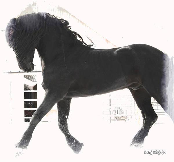 Photograph - Stallion Stride by Carol Whitaker
