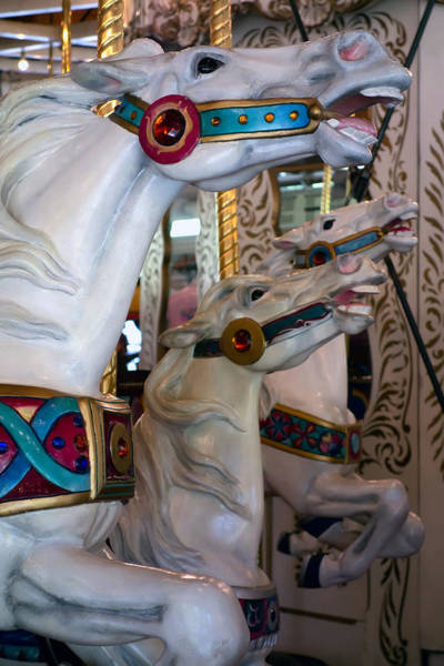 Steed Photograph - Stallions Of Looff Carousel 1909 by Daniel Hagerman