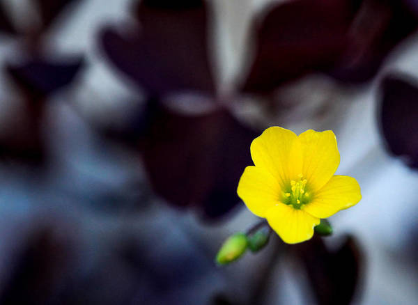 Wall Art - Photograph - Stand Out by Aaron Aldrich