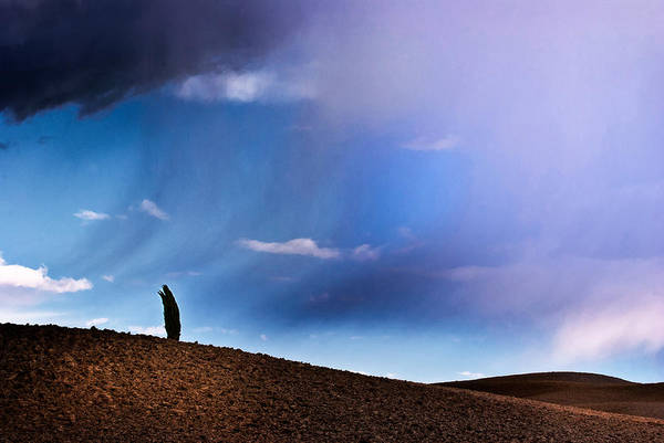 Wall Art - Photograph - Standing Against The Wind by Yuri San