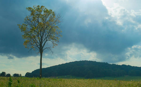 Photograph - Standing Tall At Valley Forge by Rima Biswas