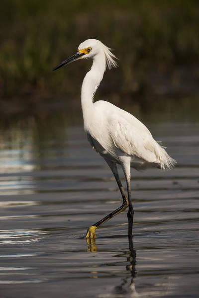 Photograph - Standing Tall by Bob Decker