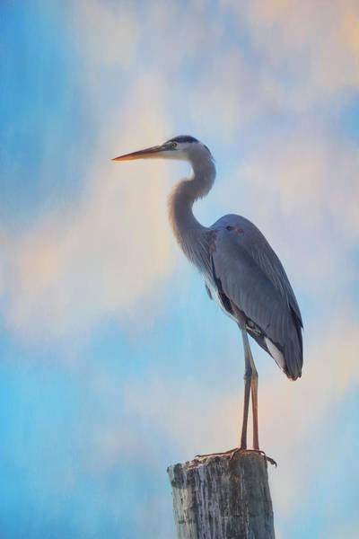 Photograph - Standing Tall by Kim Hojnacki