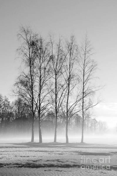 Photograph - Standing Tall by Randi Grace Nilsberg