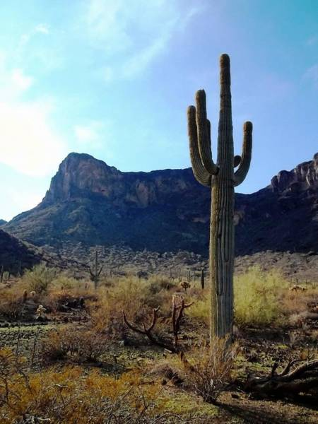 Paysage Photograph - Standing Tall - Saguaro by Glenn McCarthy Art and Photography