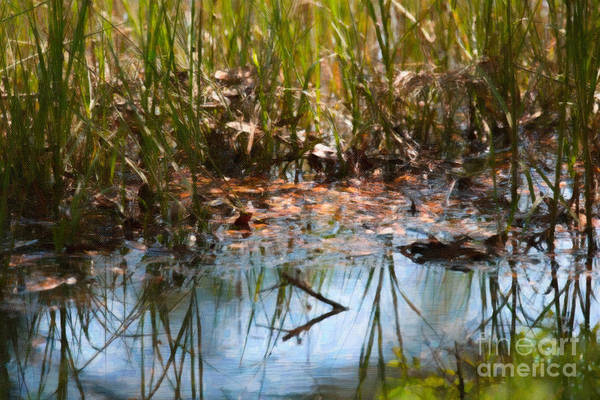 Photograph - Standing Water by Dale Powell