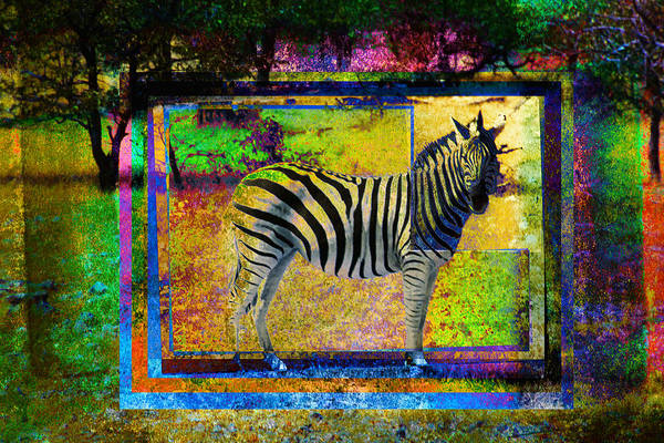 Photograph - Standing Zebra by Mauro Celotti