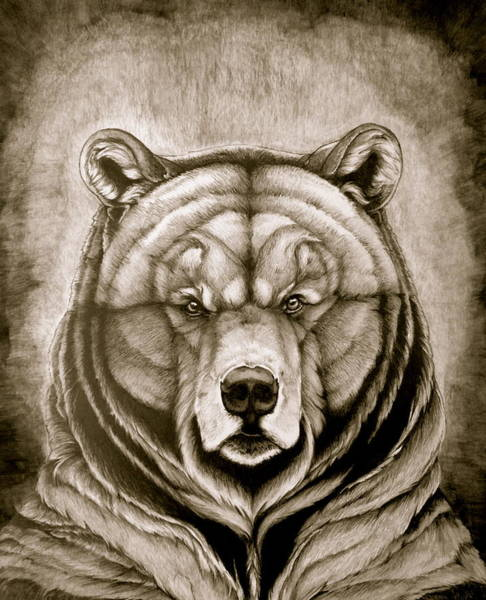 Furry Drawing - Stanley Brown Bear by Kathleen Fiorito