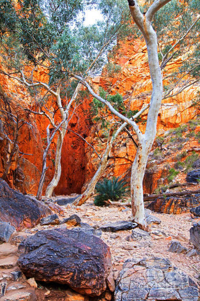 Wall Art - Photograph - Stanley Chasm by Bill  Robinson