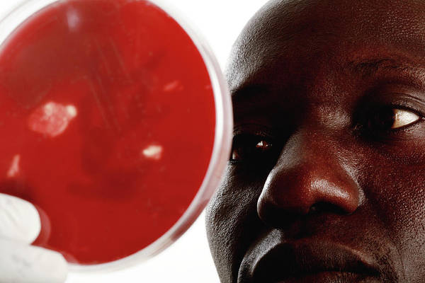 Developing Country Photograph - Staphylococcus Bacteria Research by Mauro Fermariello/science Photo Library