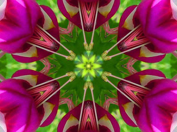 Digital Art - Star Fuchsia 1 Mandala by Diane Lynn Hix