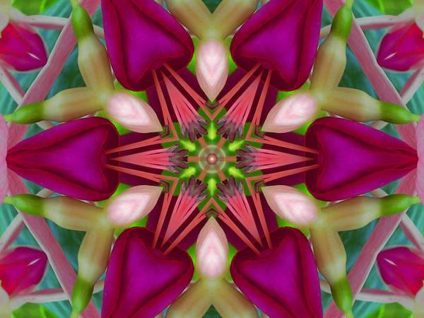 Digital Art - Star Fuchsia 2 Mandala by Diane Lynn Hix