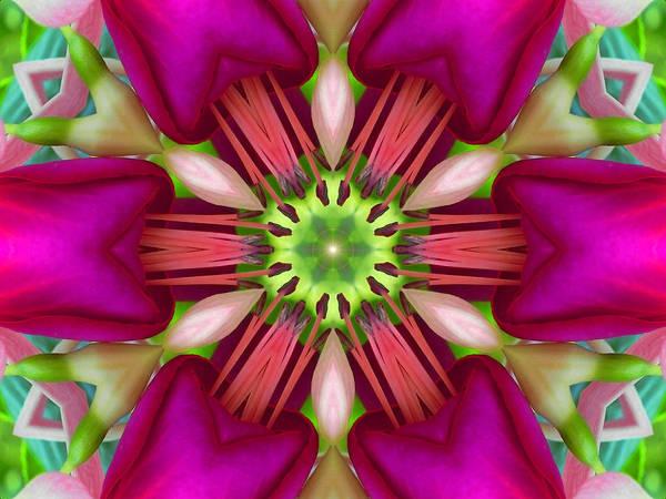 Digital Art - Star Fuchsia 3 Mandala by Diane Lynn Hix
