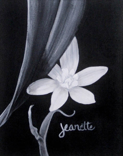 Painting - Star Of Bethlehem by Jeanette Fellows