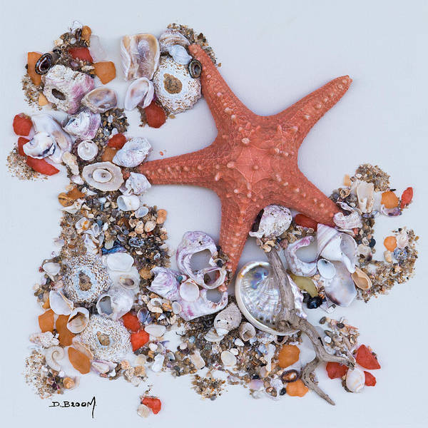 Broom Mixed Media - Star Of The Sea by Dawn Broom