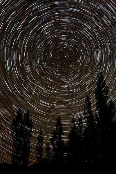 Star Track Wall Art - Photograph - Star Trails And Meteor Over Trees by Babak Tafreshi/science Photo Library