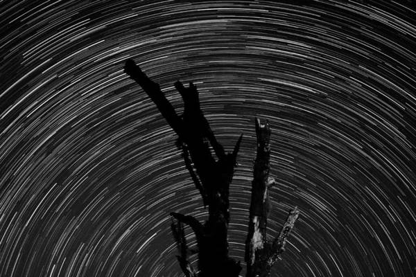 Photograph - Star Trails by Larah McElroy