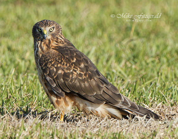 Photograph - Stare Down by Mike Fitzgerald