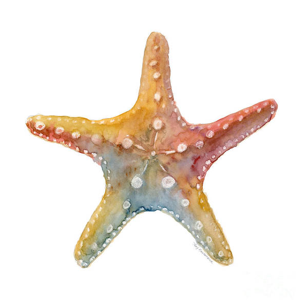 Wall Art - Painting - Starfish by Amy Kirkpatrick