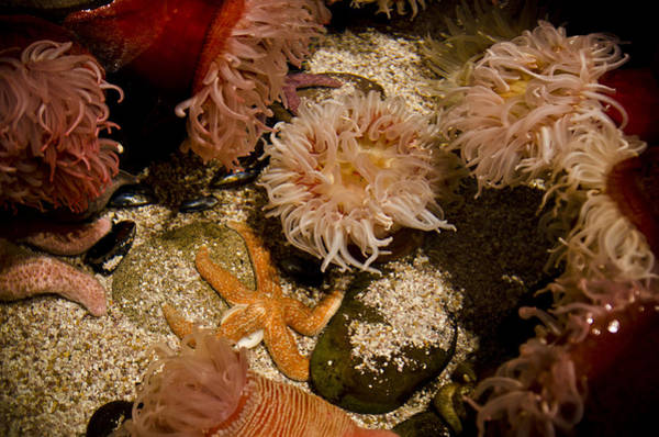 Georgia Aquarium Wall Art - Photograph - Starfish And Coral by Jessica Berlin