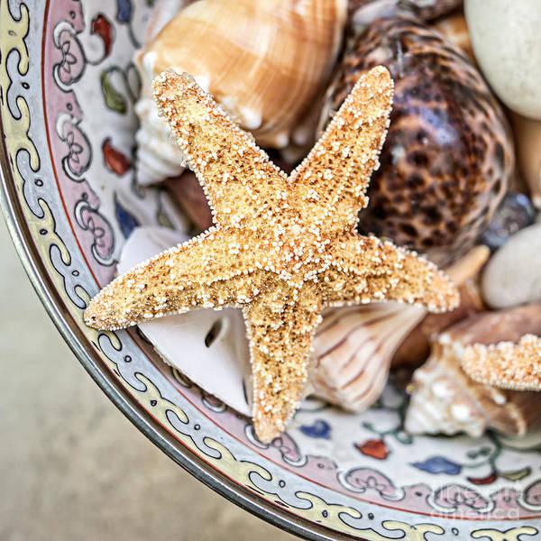 Starfish Photograph - Starfish And Seashells by Edward Fielding