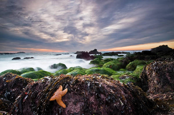 Seaweed Photograph - Starfish And Seaweed At Low Tide by Doug Steakley