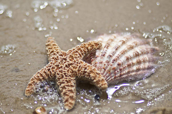 Bokah Photograph - Starfish And Shell  by Regina  Williams