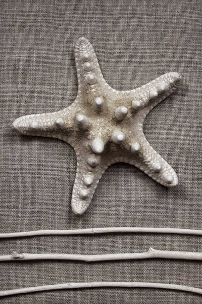 Seashell Photograph - Starfish And Sticks by Carol Leigh