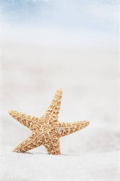 Wall Art - Photograph - Starfish by Carolyn Cochrane