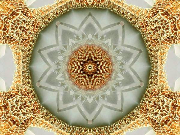 Starfish Crystal Mandala Art Print