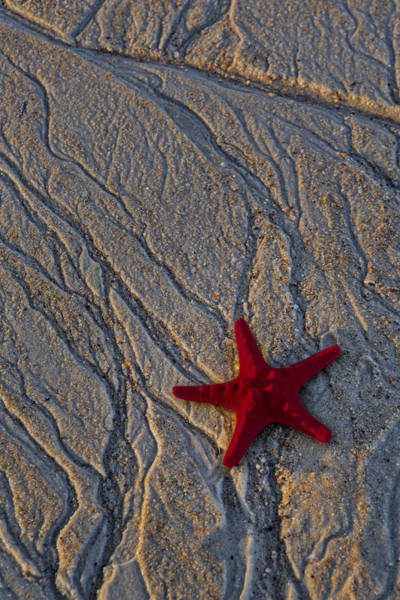 Photograph - Starfish In The Sand by Susan Candelario