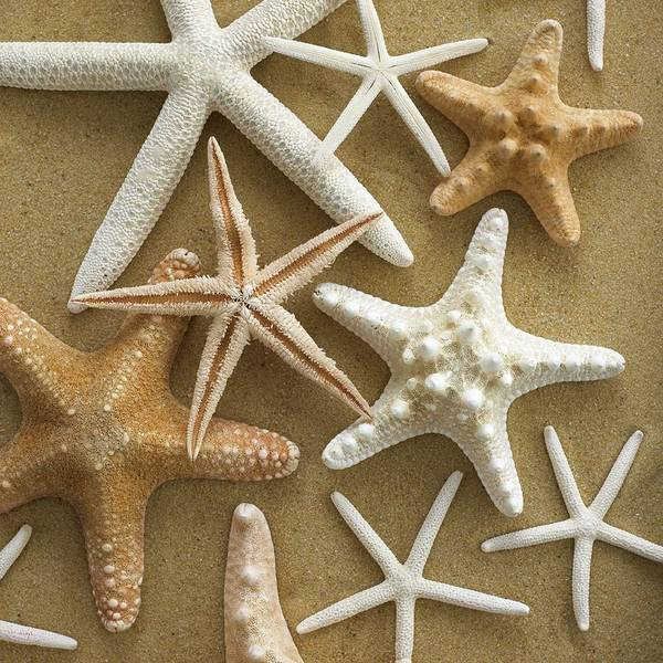 Marine Biology Wall Art - Photograph - Starfish On Sand by Science Photo Library