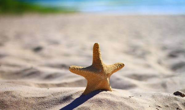 Photograph - Starfish On The Beach by Dan Sproul