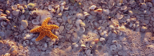 Wall Art - Photograph - Starfish On The Beach, Lovers Key State by Animal Images