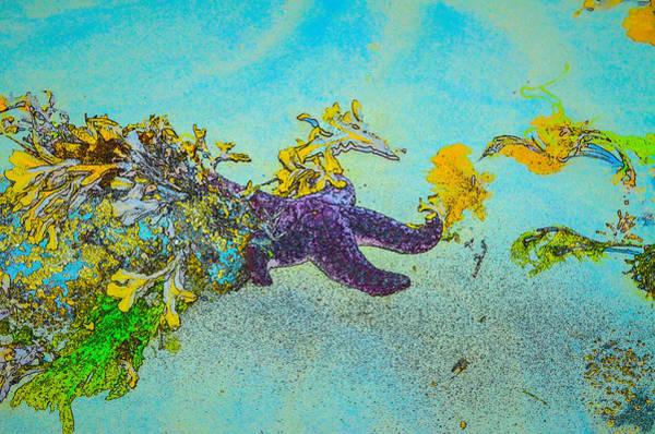 Photograph - Starfish Paradise by Roxy Hurtubise