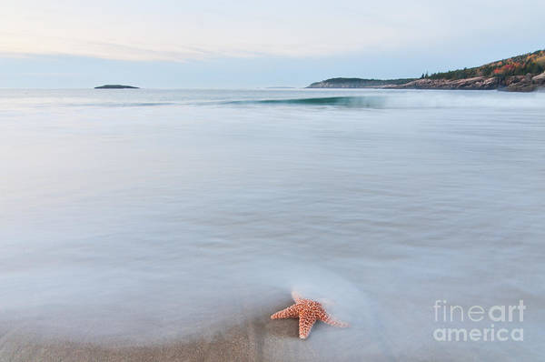 Photograph - Starfish by Sharon Seaward