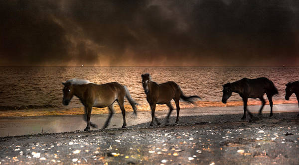 Wall Art - Photograph - Starry Night Beach Horses by Betsy Knapp