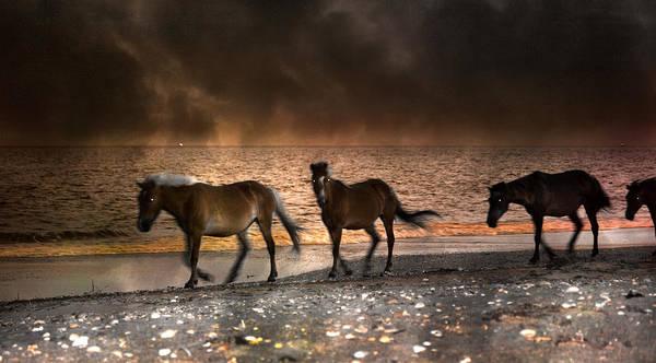 Ponies Photograph - Starry Night Beach Horses by Betsy Knapp