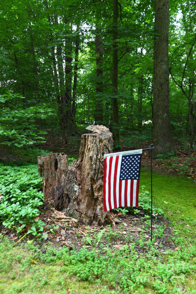 Photograph - Stars And Stripes In Woodland by James Brunker