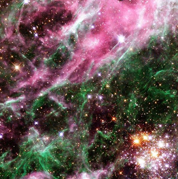 Photograph - Stars In The Tarantula Nebula by Nasaesastscihubble Heritage Team