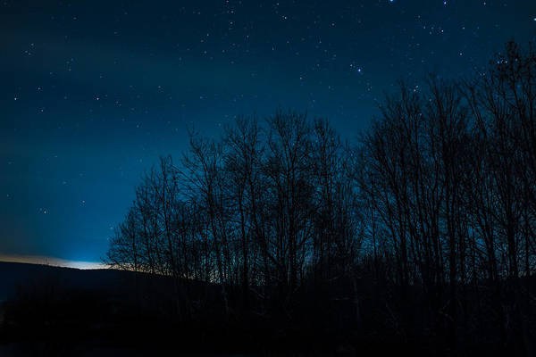 Photograph - Stars Through The Forest by Chris Bordeleau
