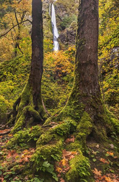 Photograph - Starvation Creek Falls by Loree Johnson