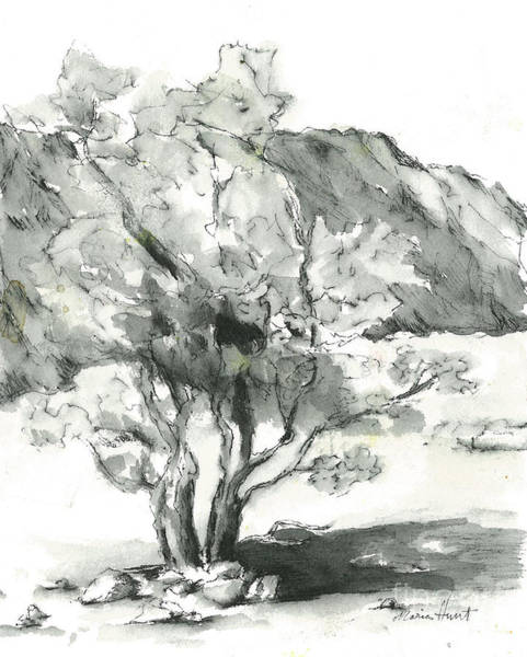 Pen And Ink Drawing Painting - Graceful Smoketree by Maria Hunt