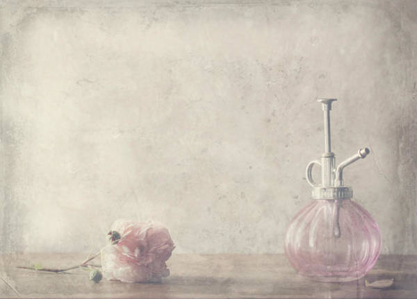 Pink Rose Photograph - Stay by Delphine Devos
