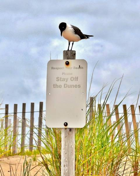 Photograph - Stay Off The Dunes by Kim Bemis